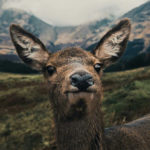 Lovely Animals - Animal GIFs